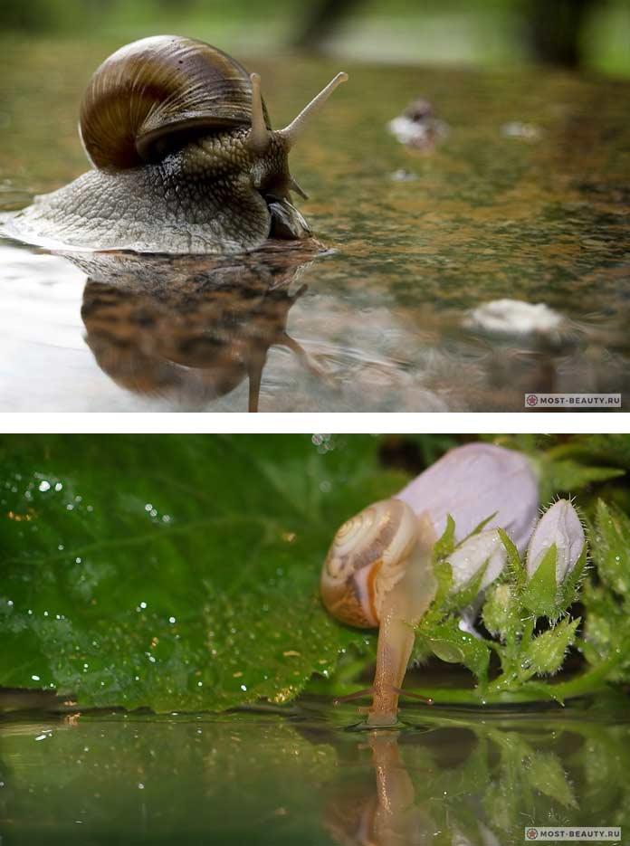 Улитка в пруду