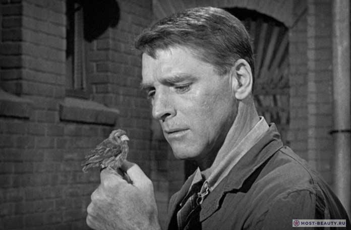 Любитель птиц из Алькатраса. США. 1962