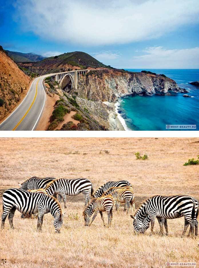 Зебры в Калифорнии