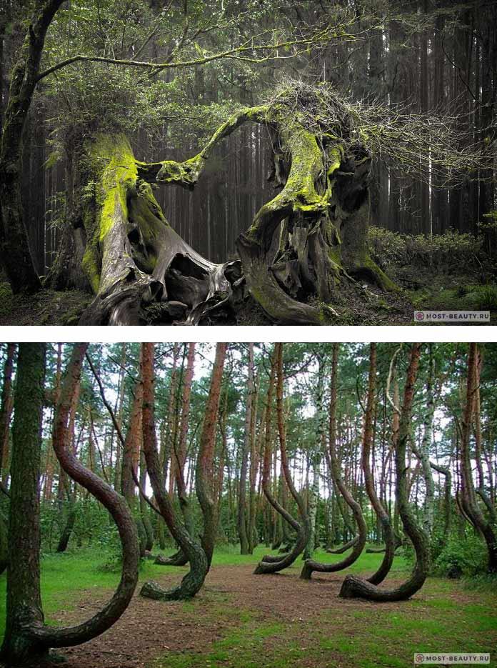 Hoia Baciu Forest / Лес Хойя, Румыния