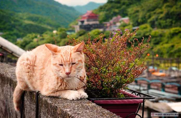 Кошачья деревня Хотонь