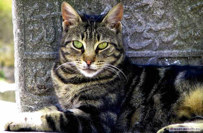 Кошка в Стамбуле