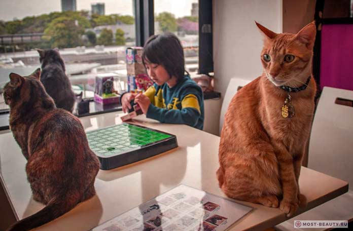Кошки в Токио