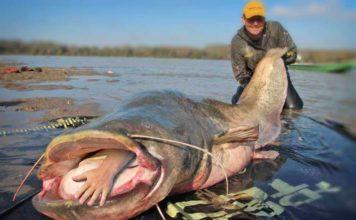 Рыбы людоеды