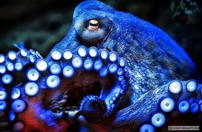 Животные голубых кровей