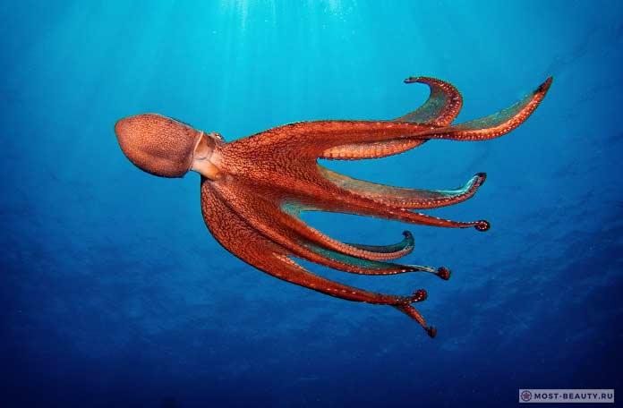 Быстрые осьминоги