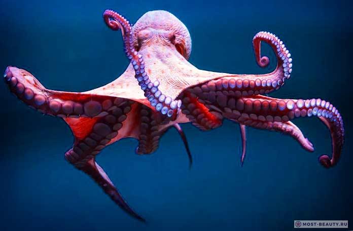 Умные осьминоги