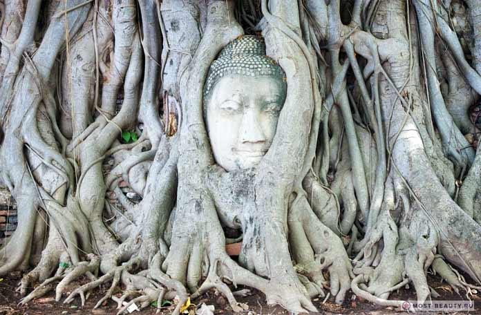 Голова Будды в корнях дерева. 11 наиболее величественных и красивых статуй Будды в мире