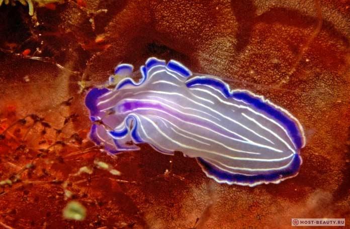 Самые красивые и необычные черви планеты