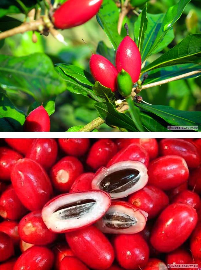 Чудо-ягода - один из самых необычных фруктов