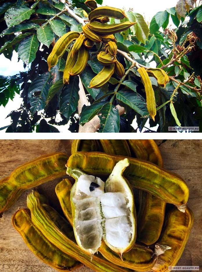 Фасоль Инга - один из самых необычных фруктов