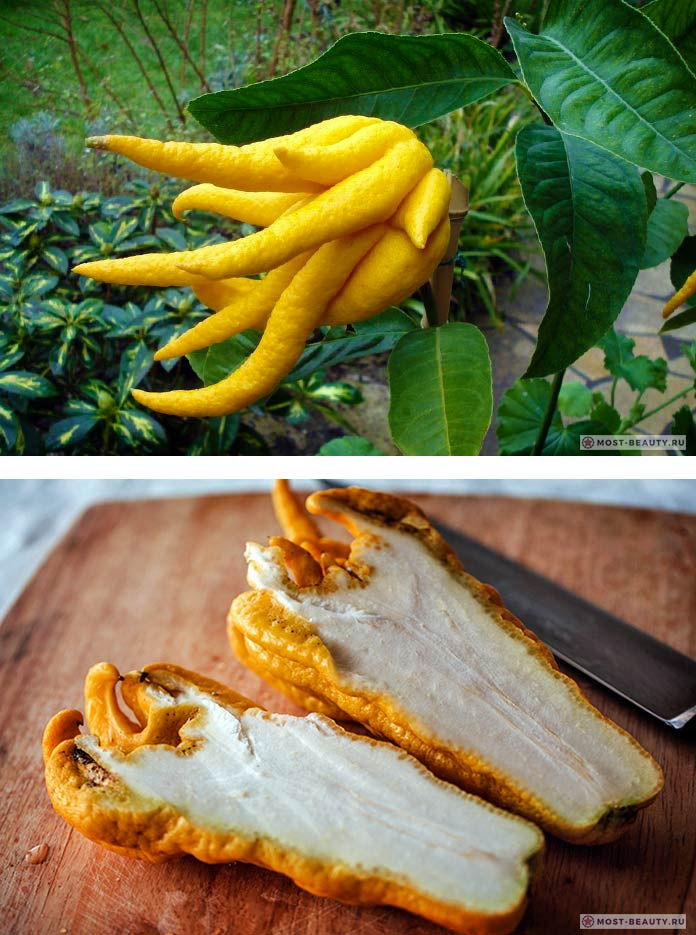 Рука Будды - один из самых необычных фруктов