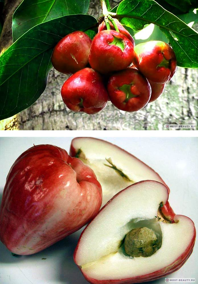 Водяное яблоко - один из самых необычных фруктов