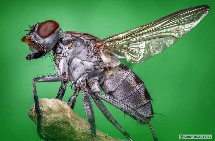 самые красивые мухи