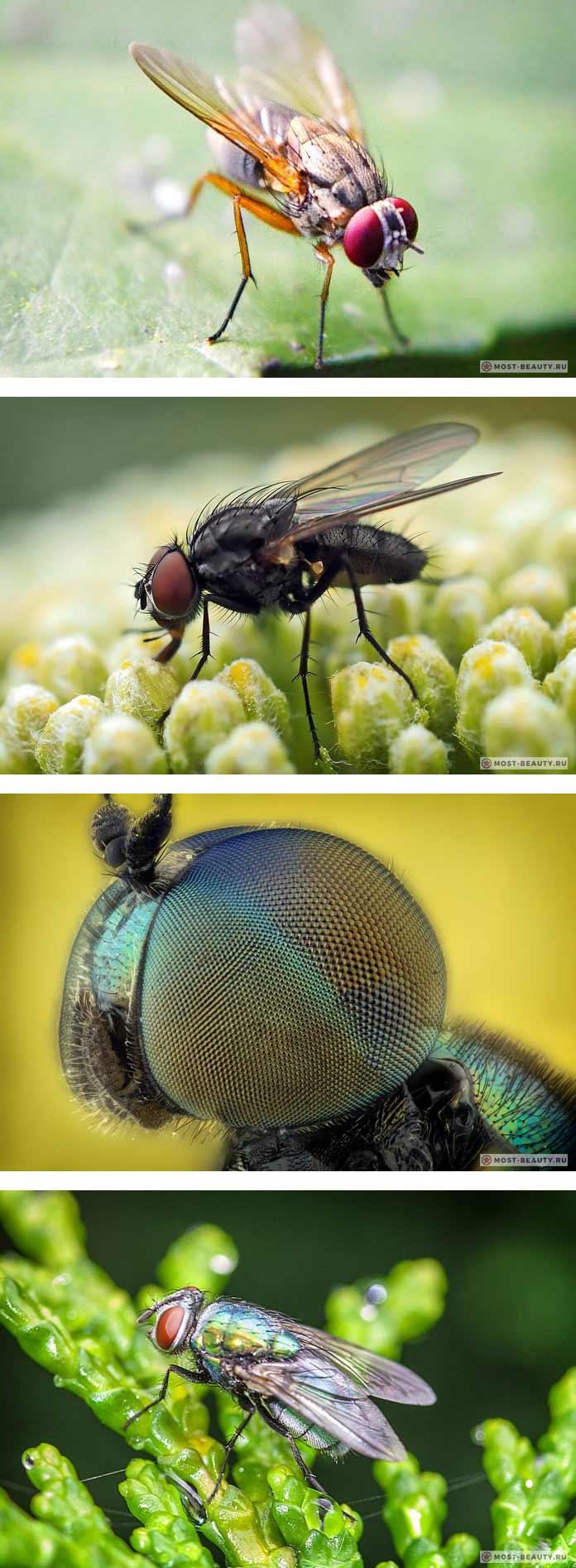 Самые красивые мухи в мире (CC0)