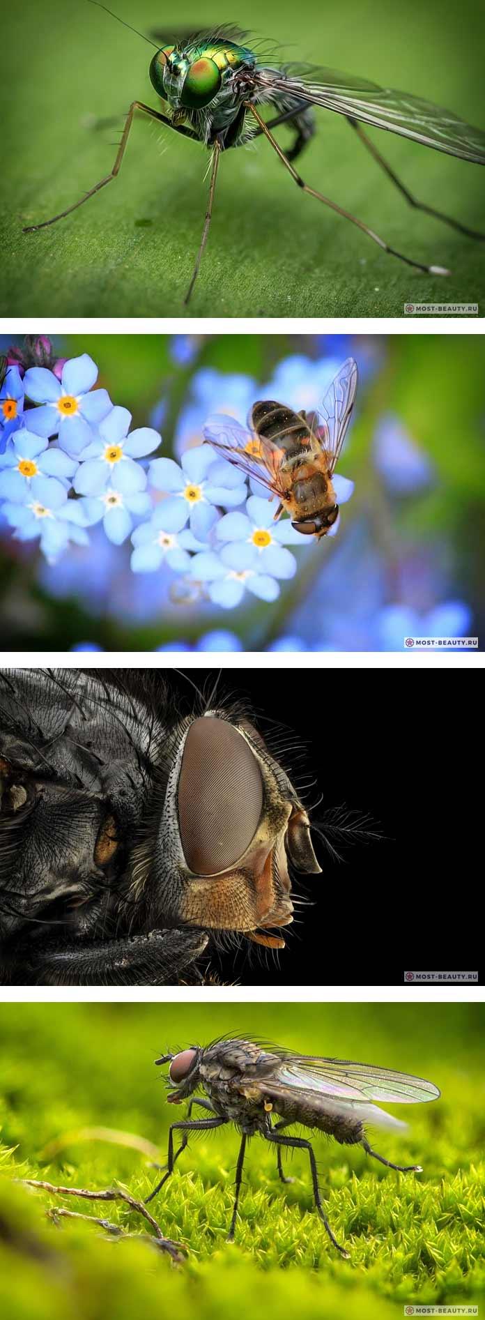 Очень красивые фото мух (CC0)