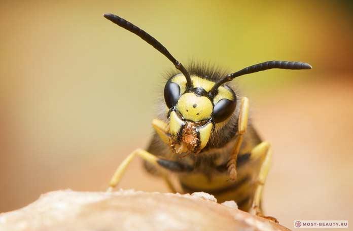 Сильно жалящие насекомые