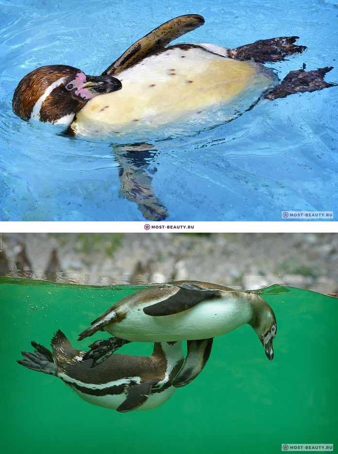 Эффект пингвина