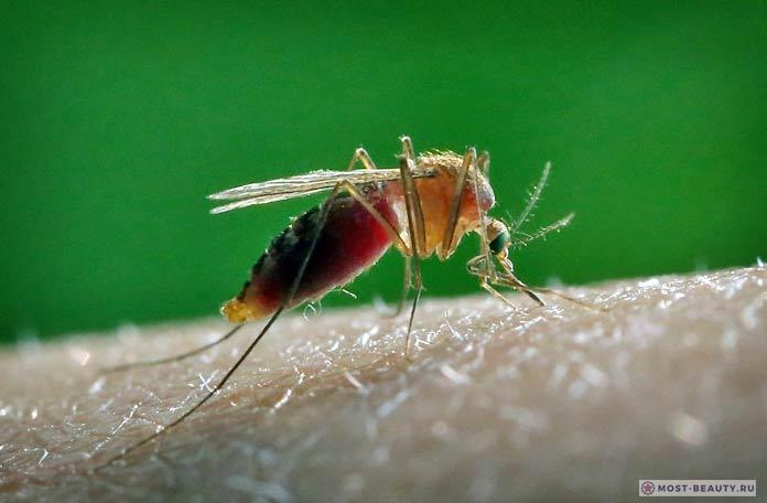 Самые красивые фото комаров: Комар обыкновенный