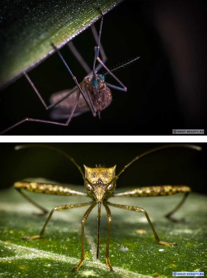 Фото комаров. CC0