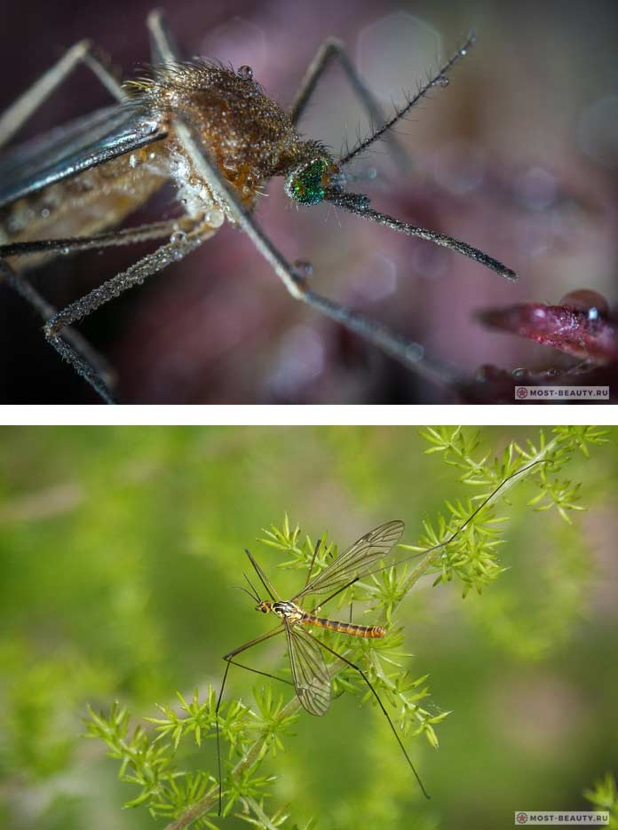 Комары. CC0