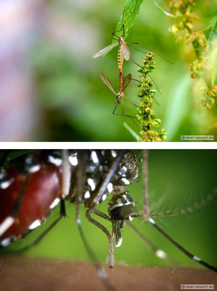Самые красивые фото комаров. СС0