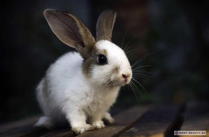 Красивые кролики. CC0
