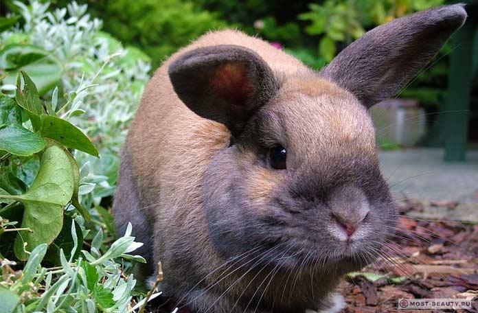 Очень красивые кролики. СС0