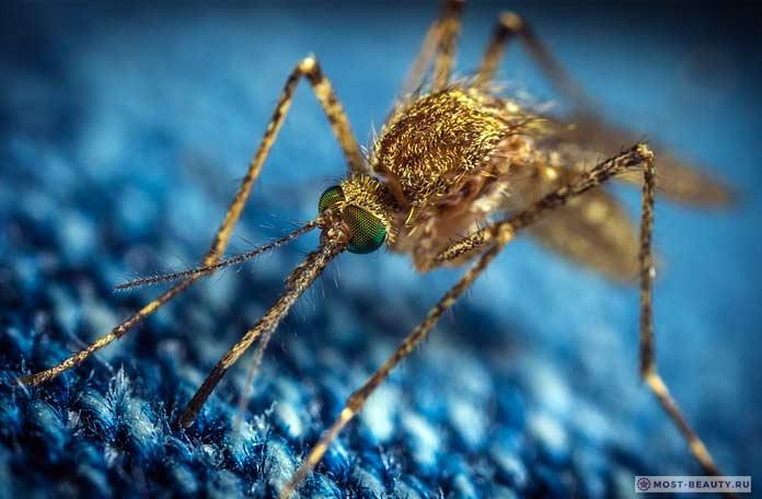 Самые красивые фото комаров: Москиты. СС0