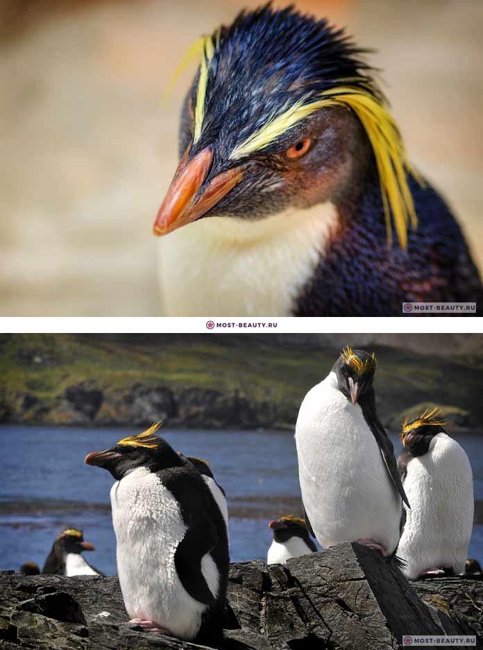 Красивые пингвины. CC0