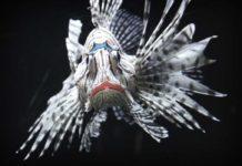 Рыбы. CC0