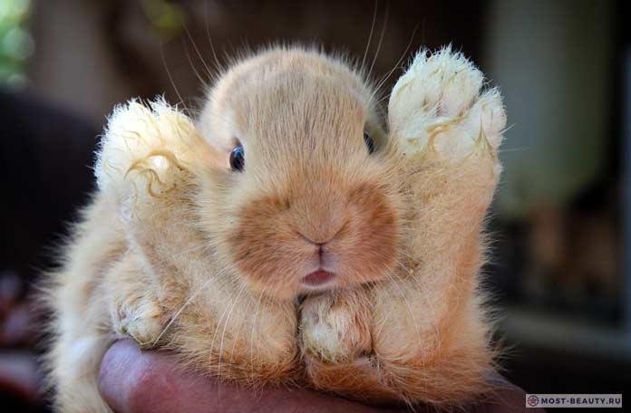 Забавный кролик. СС0