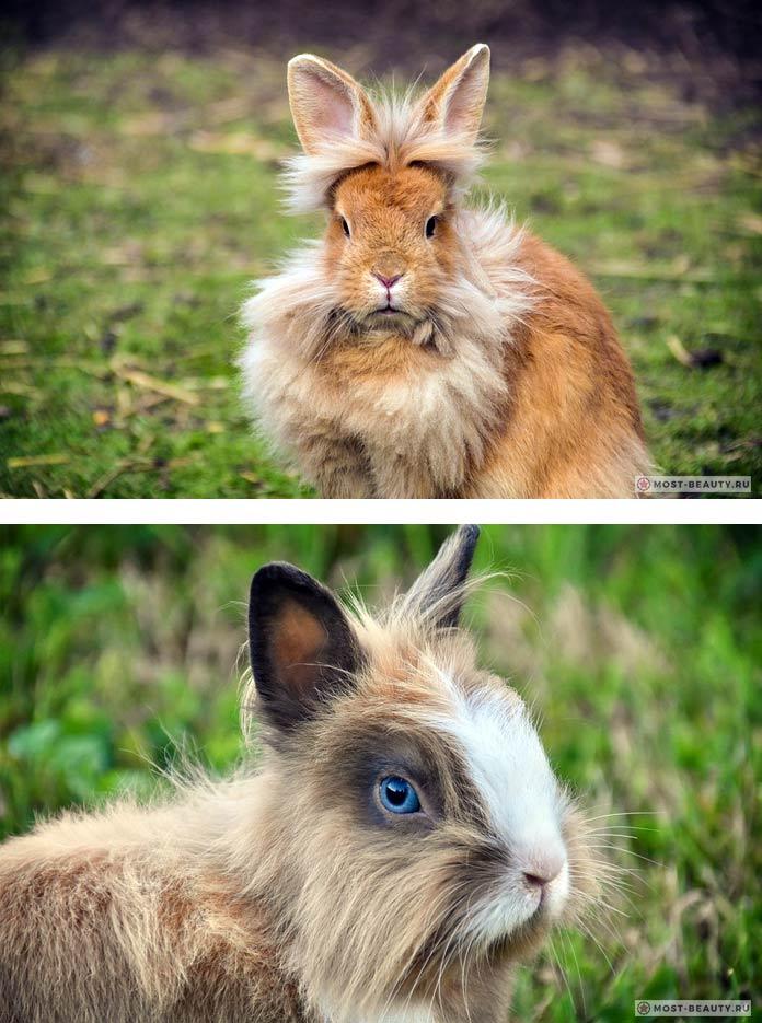 Самые красивые кролики. СС0