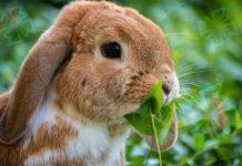 Кролики. CC0