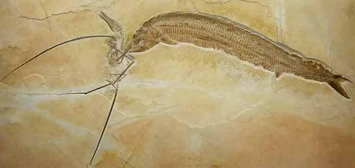 Окаменелости динозавров: Охотник, ставший добычей