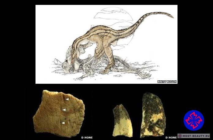 Окаменелости динозавров: Падальщик