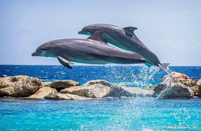 Красивые дельфины. СС0
