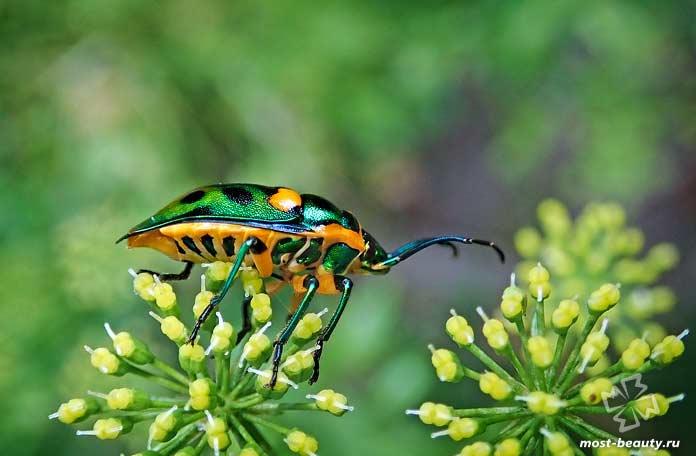 Красивые виды жуков. СС0