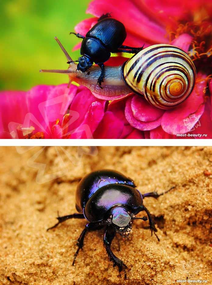 Красивые жуки на фотографиях. CC0