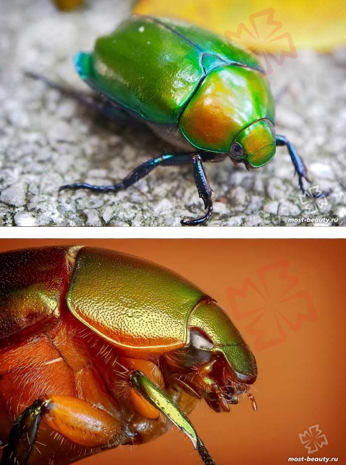 Красочные фотографии жуков. CC0