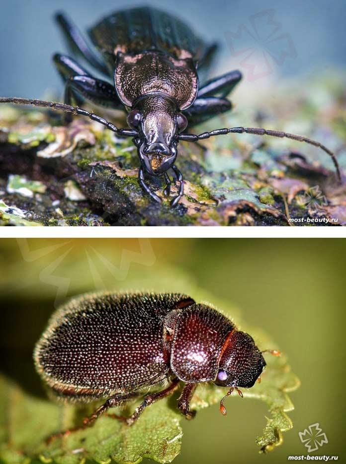 Очень красивые жуки. CC0