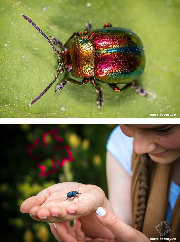 Удивительные жуки. CC0