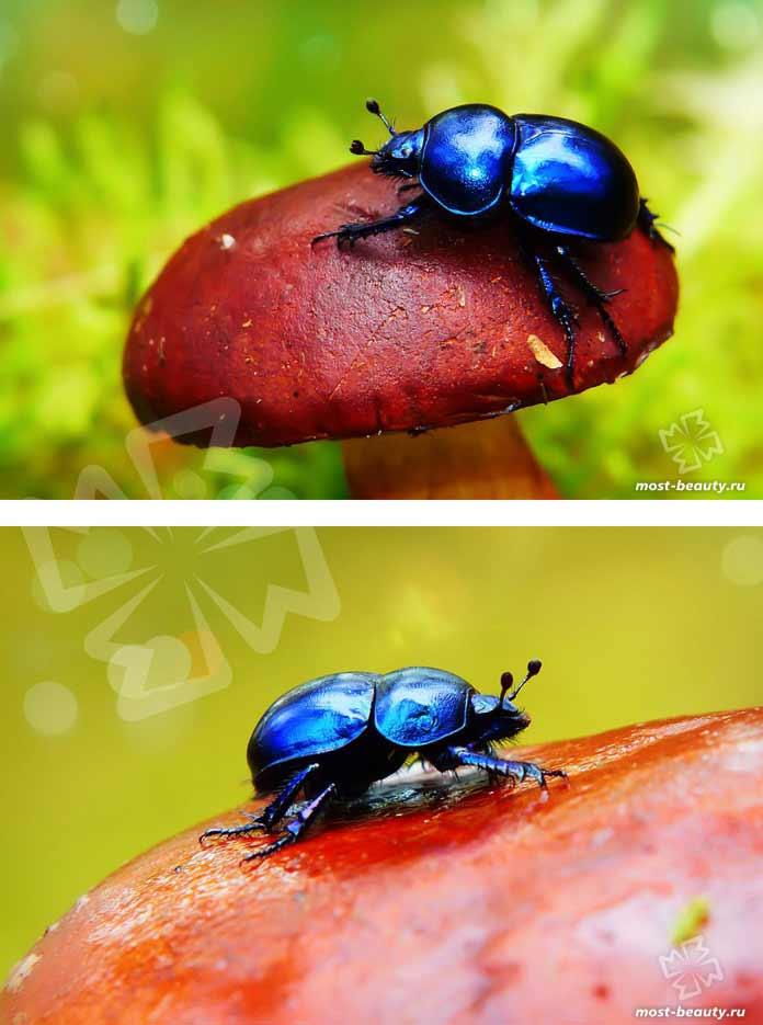 Фотографии красивых жуков. CC0
