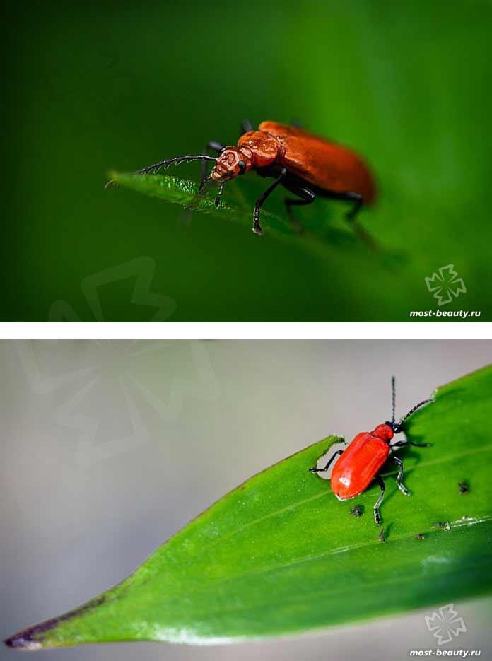 Красивые фотографии жуков. CC0