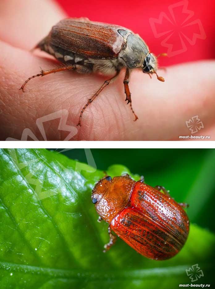 Красивые жуки. CC0