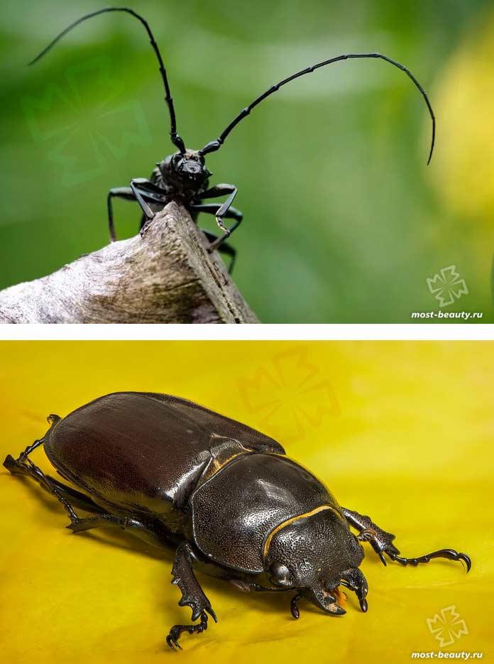 Необчные макро фото жуков. CC0