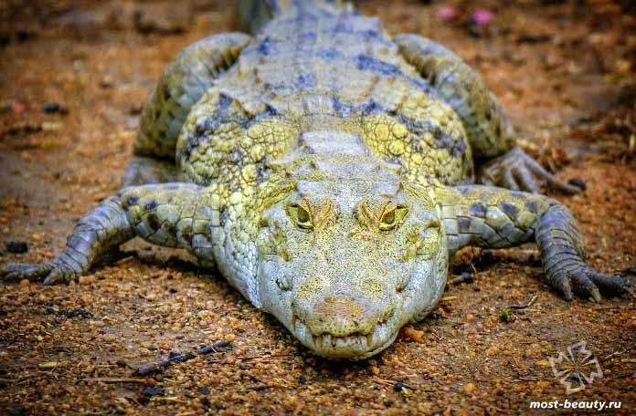 Красивые виды крокодилов. СС0