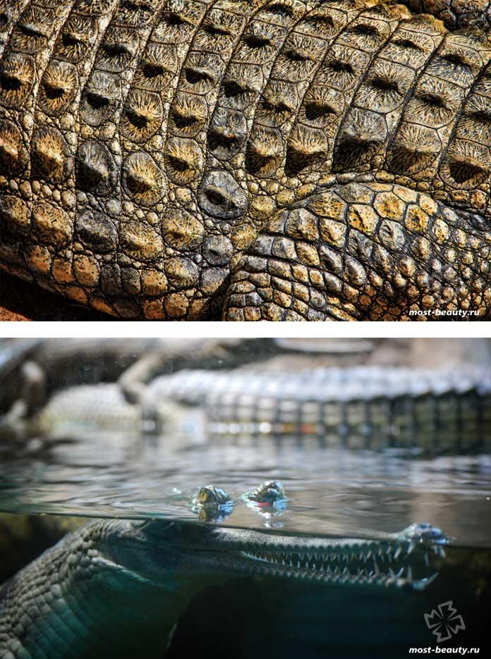 Доклад про крокодилов. CC0