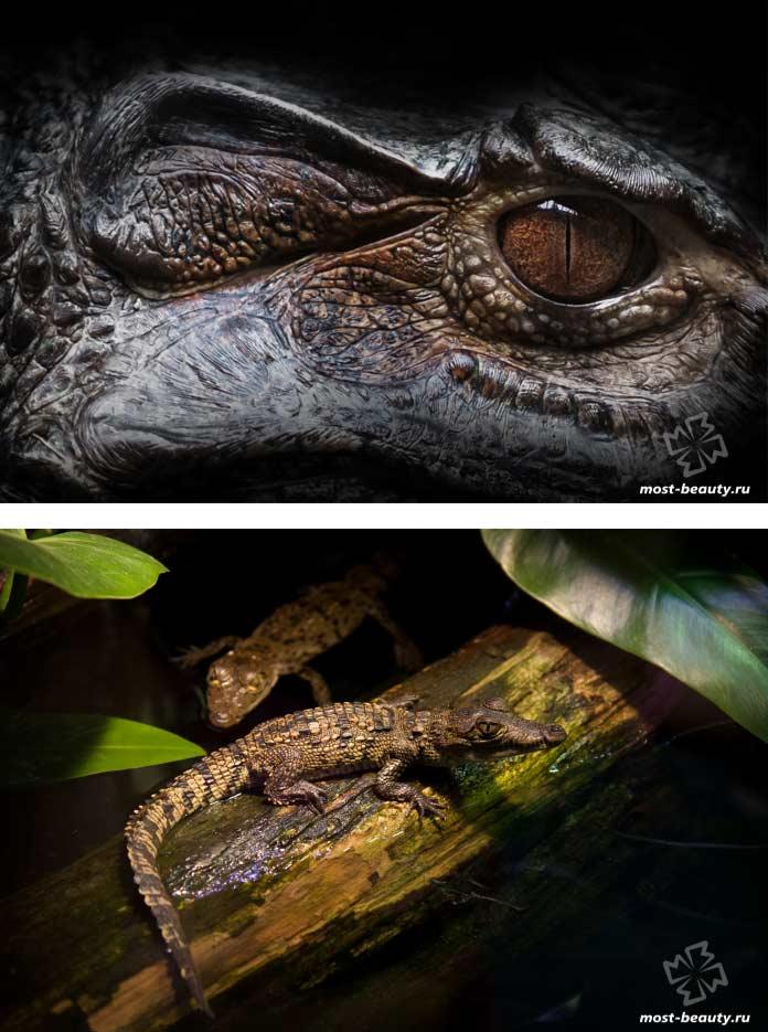 Самык красивые виды крокодилов. CC0