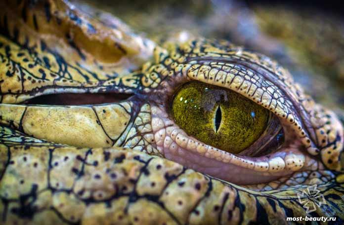 Красивые крокодилы. CC0